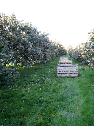 Orchard 068